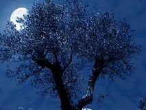 Olivgrüne Nacht Lizenzfreie Stockfotografie