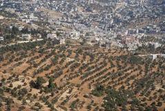 Olivgrüne Obstgärten in Jordanien Stockfoto