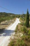 Olivgrüne Plantage und Zeile der Zypresse Stockfotografie