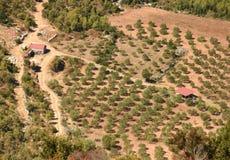 Olivgrüner Bauernhof auf adriatischer Insel von Lastovo, Kroatien Lizenzfreie Stockfotografie