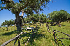 Olivgrüner Garten im Mittelmeerland Stockfotos