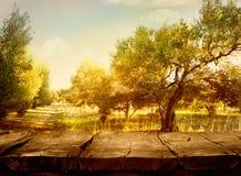 Olivgrüner Obstgarten stockfotografie