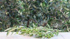 Olivgrünes Bündel, unscharfe Olivenbäume auf Hintergrund mit einem Thema im Freien stockbild