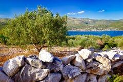 Olivgrünes plantage durch das Meer Stockbilder