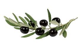 Olivgrön filial med svarta oliv på vit bakgrund Royaltyfri Foto