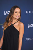 Olivia Wilde Royalty Free Stock Photography