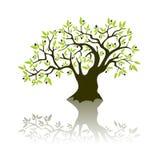 olivier illustration stock