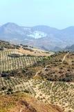 Oliviers dans les montagnes de Grenade Image libre de droits