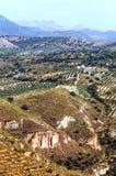 Oliviers dans les montagnes de Grenade Photos libres de droits