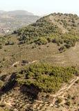 Oliviers dans les montagnes de Grenade Photo stock