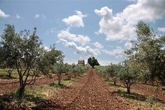 Oliviers en Provence Image libre de droits