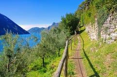 Olivo do ` do dell de Gandria Sentiero no lago Lugano fotografia de stock royalty free