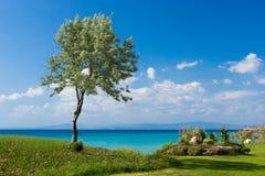 Olivo en la playa griega Imagen de archivo