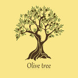 Olivo natural con las ramas para la etiqueta engomada Fotografía de archivo