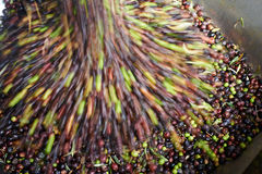 Olivoljapress Royaltyfria Foton