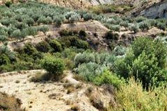 Olivos hermosos debajo del sol en las montañas fotografía de archivo