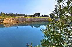 Olivträd Corinth Grekland Royaltyfri Fotografi