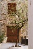 Olivträd i en kroatisk borggård royaltyfria foton