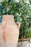 Olivträd med en vas Arkivbilder