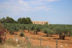 Olivträd och lantgård arkivfoto