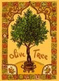 Olivträd och ram Arkivbilder
