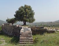 Olivträd på en forntida arkeologisk plats i Grekland Arkivbild