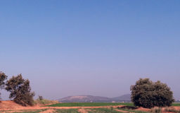 Olivträd som ser kullarna Royaltyfria Bilder
