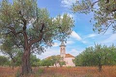 Olivträdfruktträdgård i Abruzzo, Italien Arkivbilder