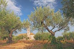 Olivträdfruktträdgård i Abruzzo, Italien Royaltyfria Bilder