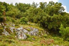 Olivträdkulle greece olive tree arkivbilder