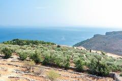 Olivträd och medelhavs- villa på grek Arkivbild