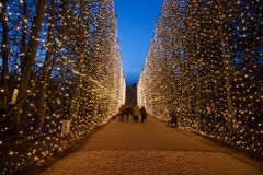 Oliwa Park at night. Christmas illumination the main alley at night in Oliwa Park, Poland Stock Photography