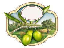 Oliwa z oliwek royalty ilustracja