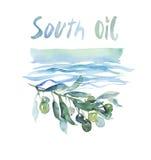 Oliwa z oliwek farby nakreślenia ilustracja Obraz Royalty Free