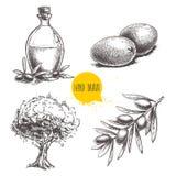 Oliwek owoc, gałąź, drzewa i oliwa z oliwek butelki nakreślenia ustawiający, Ręki rysować wektorowe ilustracje Obrazy Royalty Free