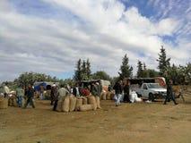 Oliwka rynek w kairouan Fotografia Royalty Free