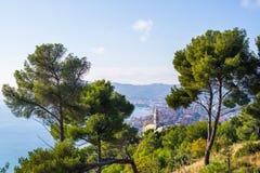 Oliwki drzewo i morski sosnowy gaj wysocy up na górkowatej linii brzegowej Liguria, Włochy Zatoka Cervo dziejowa wioska Diana i obraz royalty free