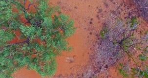 Oliwki od Śródziemnomorskiej plantacji zdjęcie wideo
