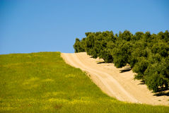 oliwni drogowi hiszpańscy drzewa Zdjęcie Royalty Free
