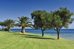 oliwni drzewka palmowe Fotografia Royalty Free