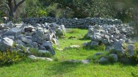 Oliwni gaje i ogródy w Montenegro zbiory