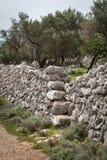 Oliwny gaj i kamienne ściany blisko miasta Cres obrazy royalty free