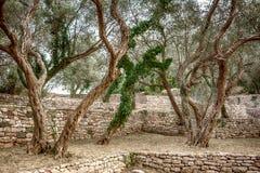 Oliwny stary ogród blisko Milocher parka zdjęcia royalty free
