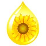 olja kärnar ur solrosen Royaltyfri Fotografi