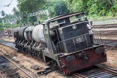 Olje- drev i Sri Lanka Royaltyfria Bilder