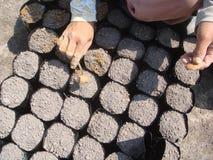 Olje- gömma i handflatan gödningsmedel Arkivfoto