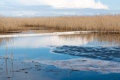 Olje- kontrollbang på en sjö efter en oljeutsläpp Fotografering för Bildbyråer