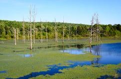 Olje- liten vikdelstatspark Arkivfoto