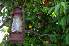 Olje- lykta som hänger från orange träd Arkivbild