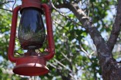 Olje- lykta som hängs från träd Royaltyfria Bilder